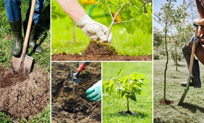 как посадить дерево в вальхейм