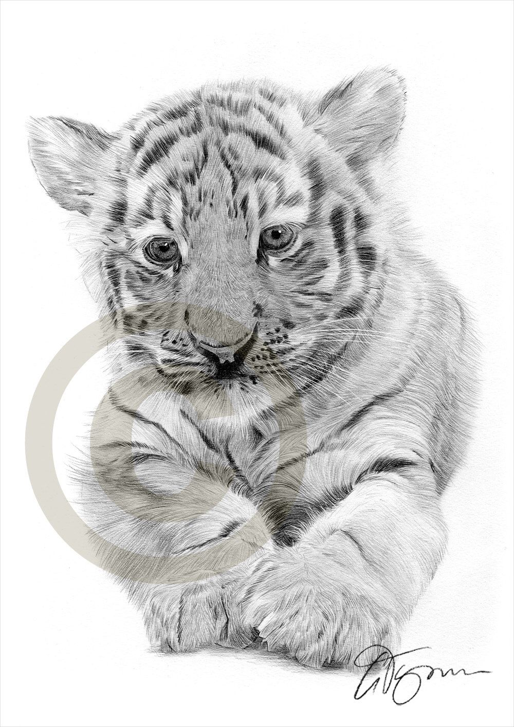 African bengal tiger cub pencil drawing print a4 size artwork signed by artist gary
