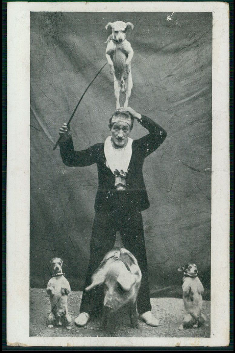 Circus Clown Dog Trainer With Pig Original Old 1910s Postcard
