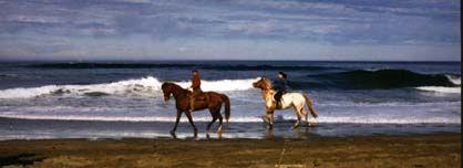 Wildcat Beach Horseback Ride At Point Reyes Ca