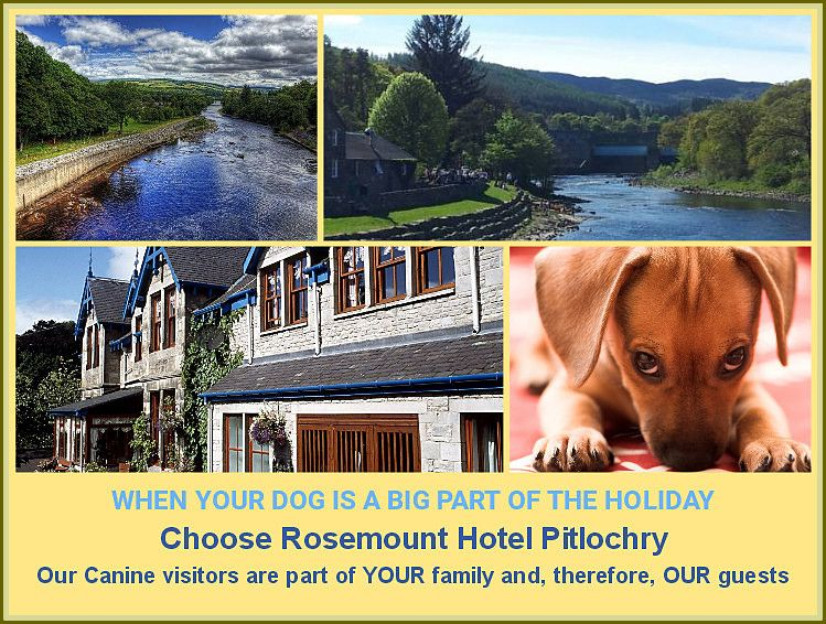 For dog friendly holidays Pitlochry, stay at Rosemount