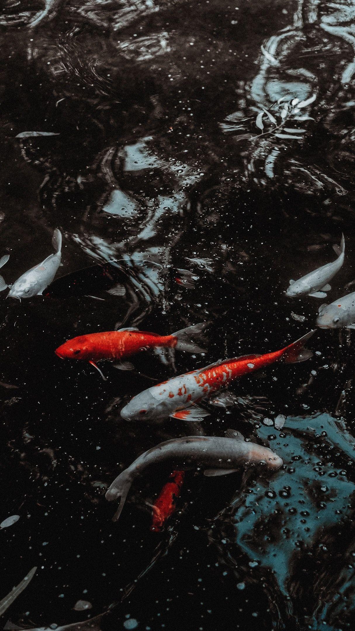 Animal Wallpaper Ipad Background Fish In 2020 Fish Wallpaper Yin Yang Koi Ipad Mini Wallpaper