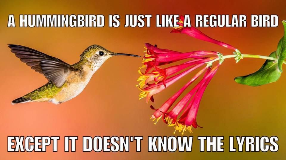 A Hummingbird How to attract hummingbirds, Birds
