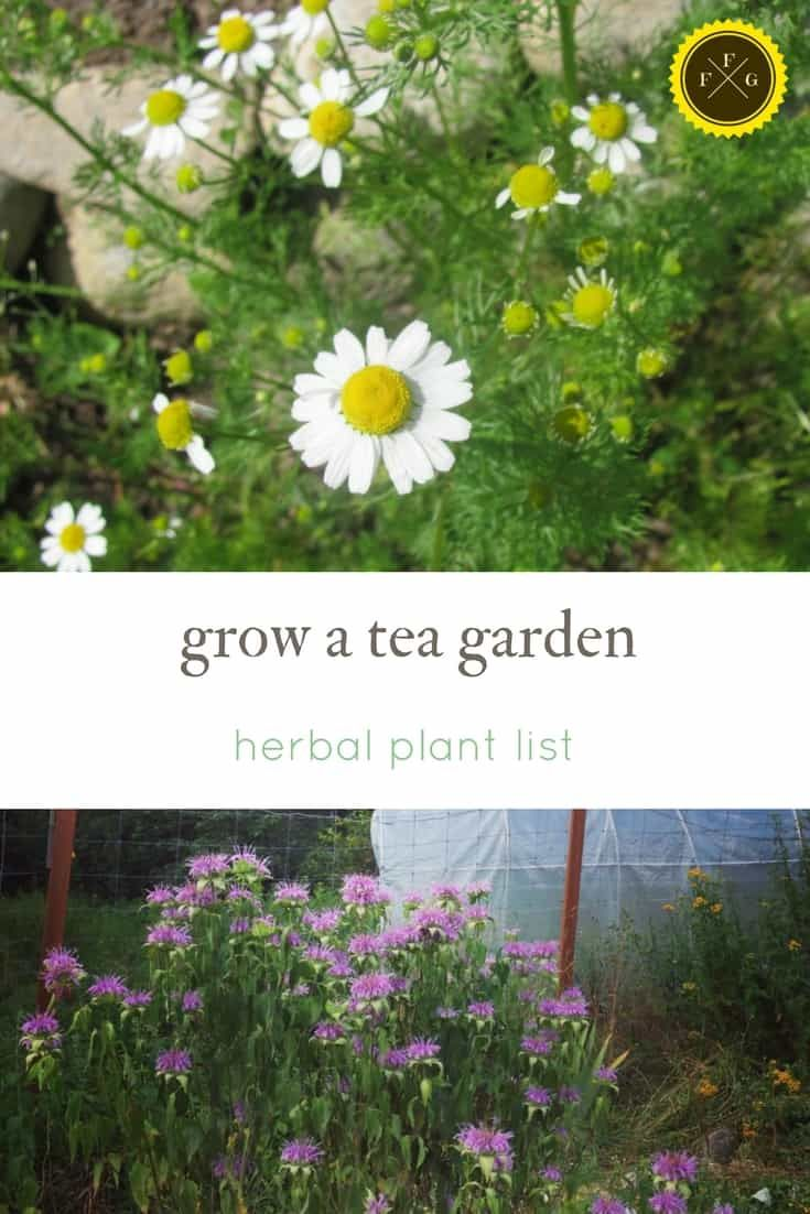 Grow a Herbal Tea Garden & Making Sun Tea is part of Tea Herb garden - What are the best herbs for tea  Here's a list of plants and herbs you can grow in your garden for herbal tea  Growing a herbs tea garden is very rewarding, and many of them smell amazing and have beautiful flowers  Grow and design your tea garden and enjoy a fresh cup of sun steeped tea  How to make sun tea recipe
