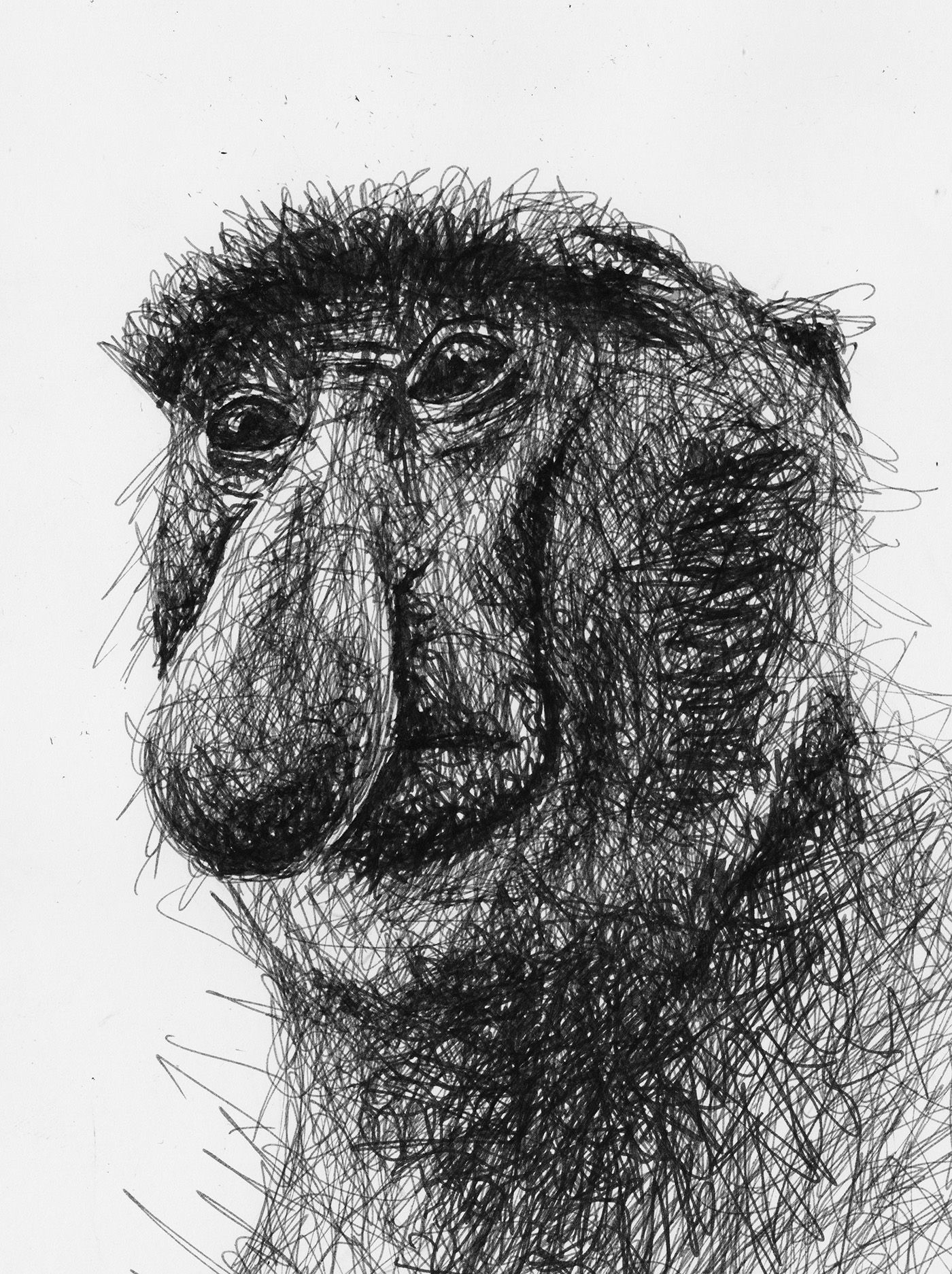 Scribble drawing of a proboscis monkey by filip walczak