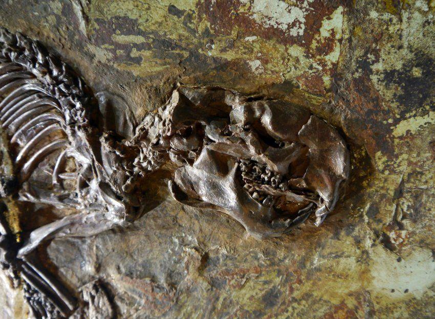 Sept. 2012. Bis zu zwei Kilo schwer und einen Meter lang: Wie das Tropen-Eichhörnchen in den Grunewald kam, ist unklar.