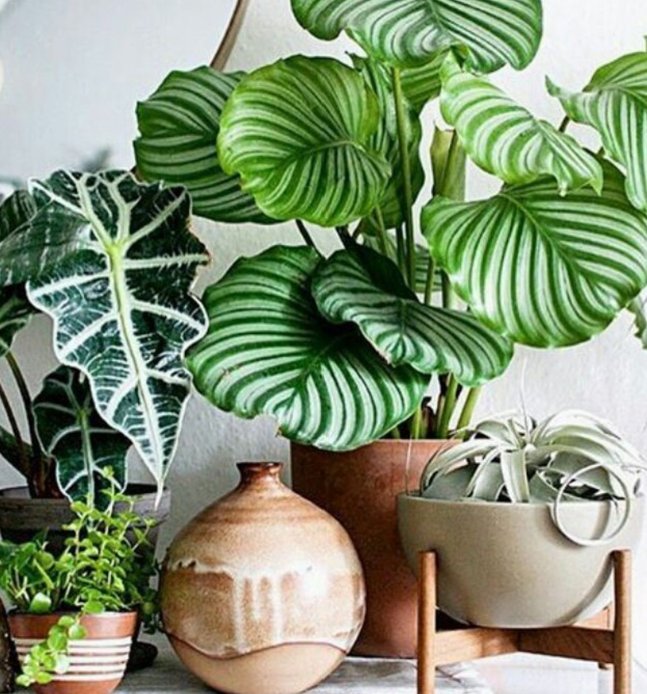 Houseplants Houseplants In 2019 Plants Indoor Plants House Plants