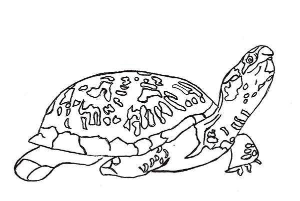 Https Www Google Com Search Q Reptiles Coloring Pages Coloring Pages Turtle Coloring Pages Coloring Eggs