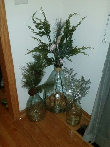 Apothecary jars, and demijohns with evergreens