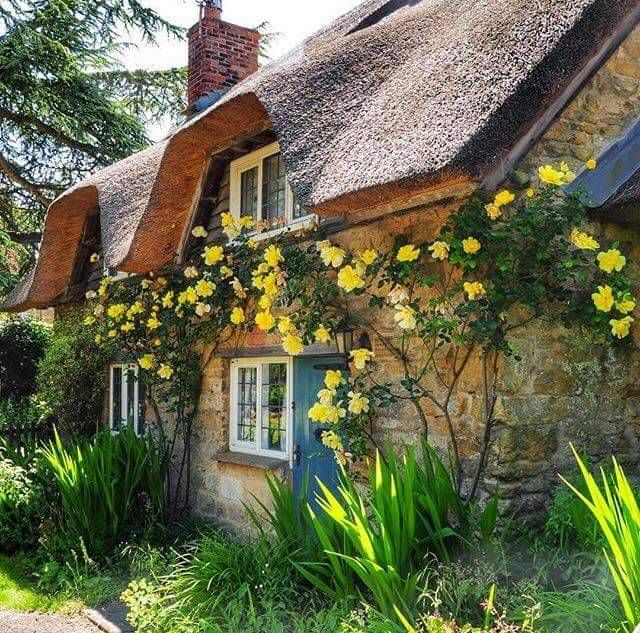 love the yellow climbing roses on the cottage i do love a cottage and cottage gardens