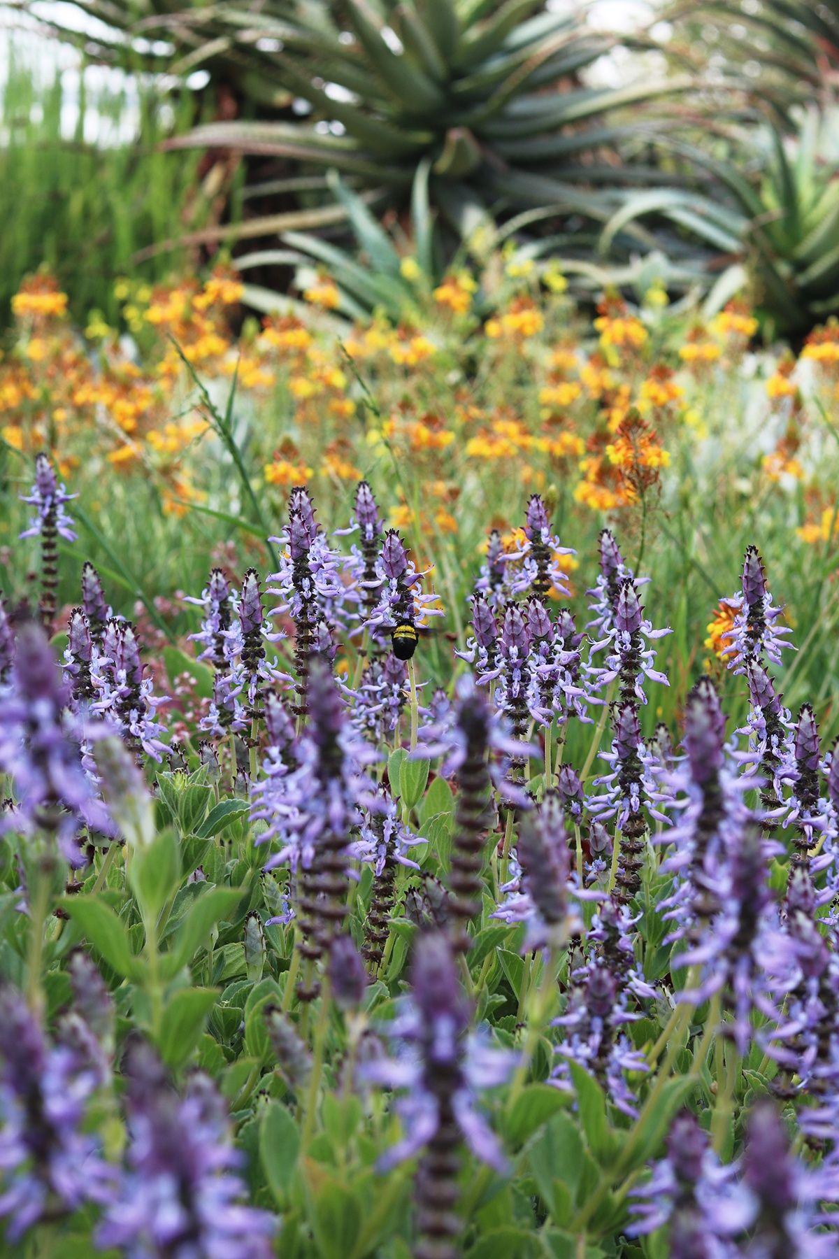 My Mother S Garden Summertime In South Africa Gardenista Garden Visits Small Yard Landscaping Waterwise Garden