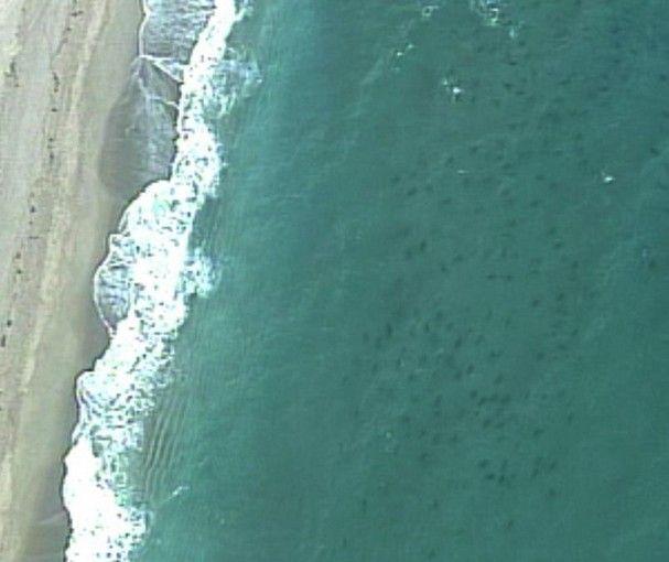 areal photos of sharks along coastlines | Sharks Migrating Florida