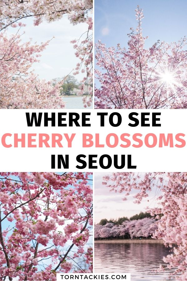 Where To See Cherry Blossoms In Seoul Korea Torn Tackies Travel Blog In 2020 Seoul Korea Travel Seoul Travel South Korea Travel
