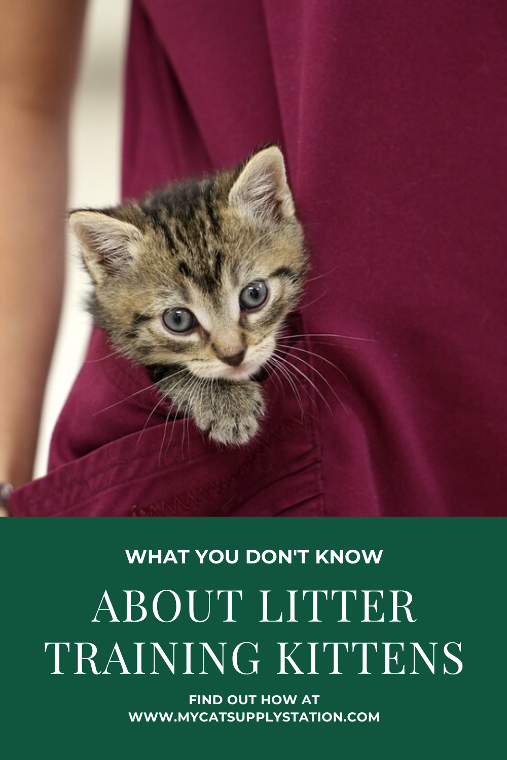 One Simple Trick Saves So Much Mess In 2020 Litter Training Litter Training Kittens Litter