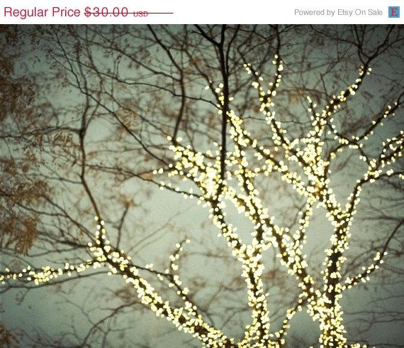 Tree Photograph Fairy Lights Winter Tree Art Christmas Gray Bare Branches Fine Art Photography Everything Is Illuminated Christmas Lights Everything Is Illuminated Fairy Lights