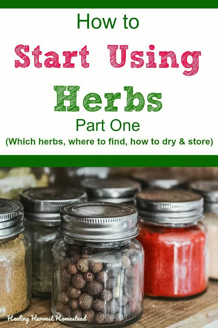 How to start using herbs for health! How to choose which herbs to use, where to get them (foraging, growing in a garden, buying), how to dry herbs and wild plants, and how to store them correctly. If you've ever wanted to be an herbalist and use herbs, your basic questions will be answered in part one of this 12 part series. #healingharvesthomestead #use #herbs #howto #forage #grow #dry #store #usingherbs #fromthegarden #naturalremedies #togrow #inthegarde #NaturalRemediesForCoughAndSoreThroat