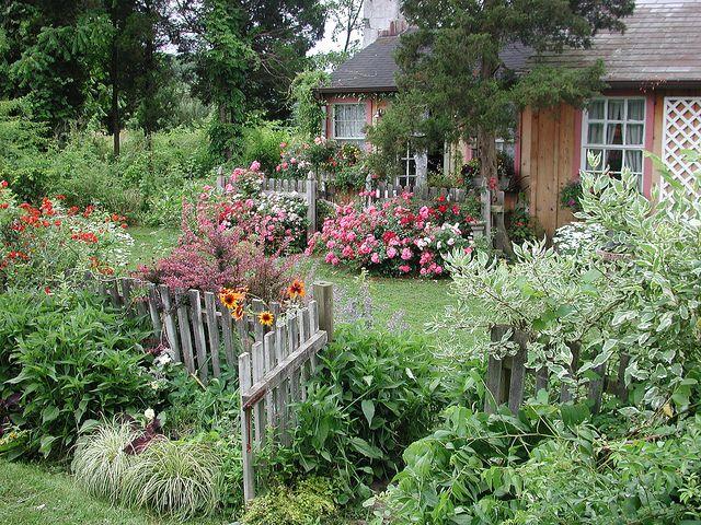 Simple Rose Garden: Flower Carpet Roses Behind Cottage Garden Gate