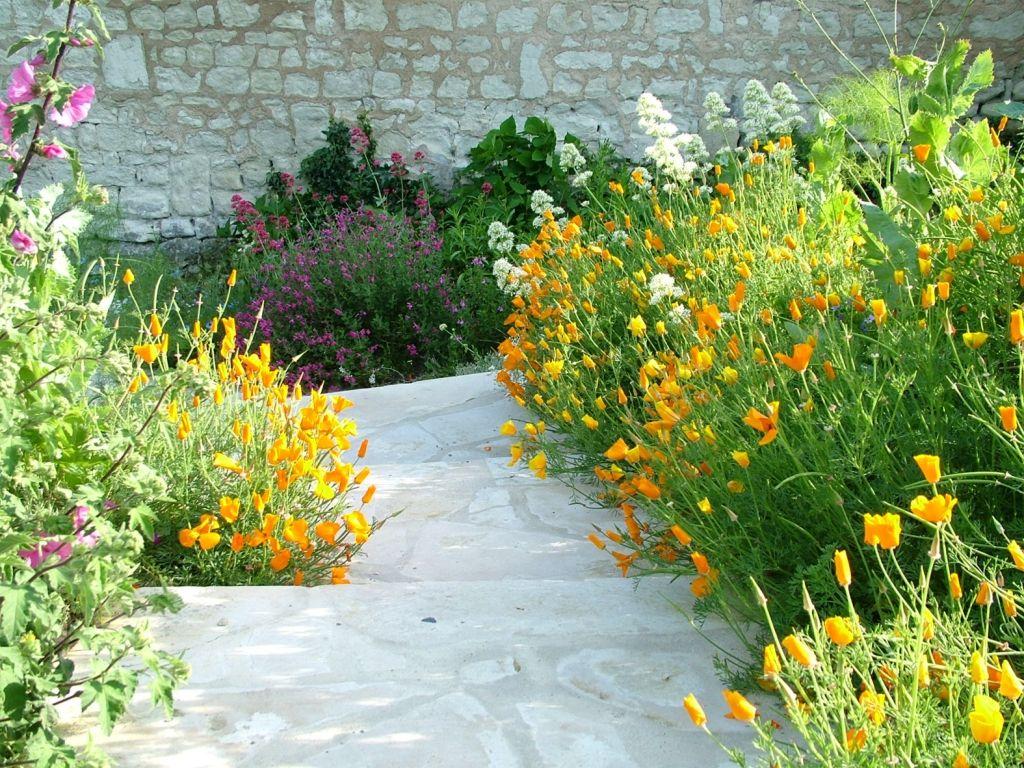 Comment appelez vous ces fleurs escholschia n 39 est ce pas what the name of such flowers - Le jardin des fleurs poitiers ...