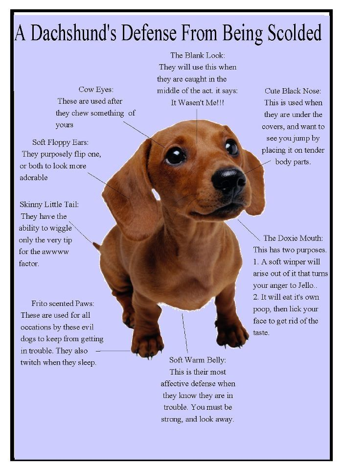 Pin by Connie Briggs on Rescue dogs And dachshund rescue