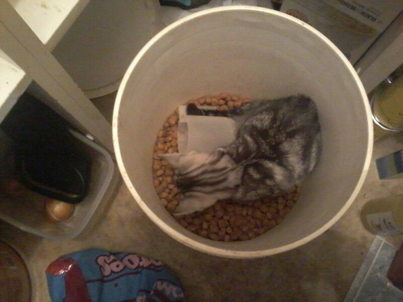 This morning she found her way into the dog food bin