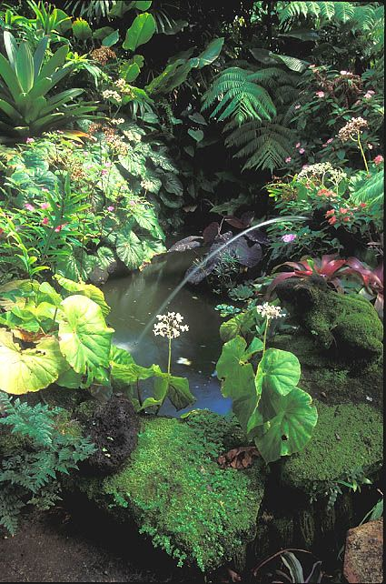 smal pond with old frog fountain, Garden Clubs of America