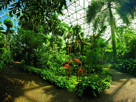 699d938e79e15554a5a9de34e15b5e25 - St Louis Botanical Gardens Butterfly House