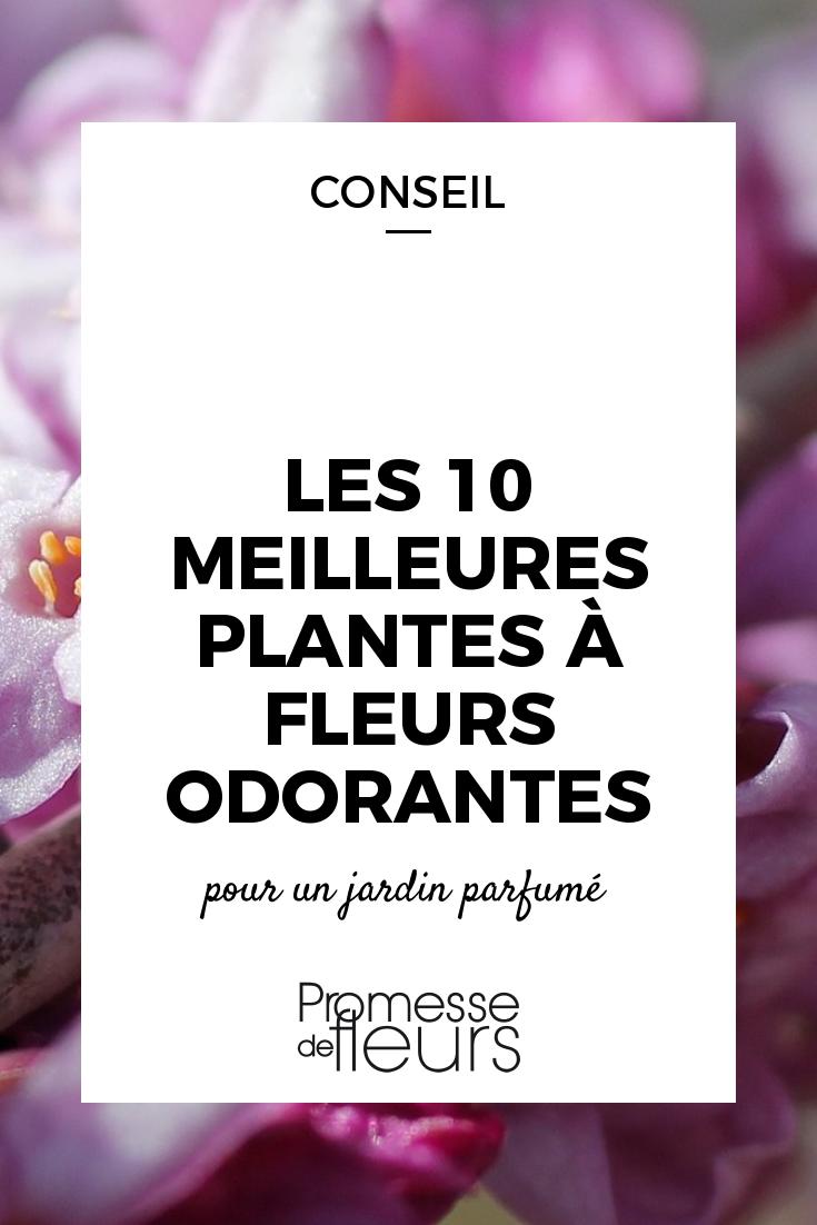 10 plantes à fleurs odorantes et parfumées | Gardening ...