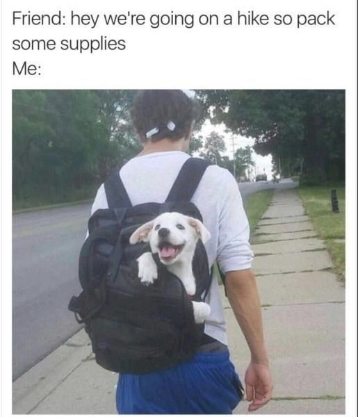 Classic Doggo Memes For People In Need Of Fluff
