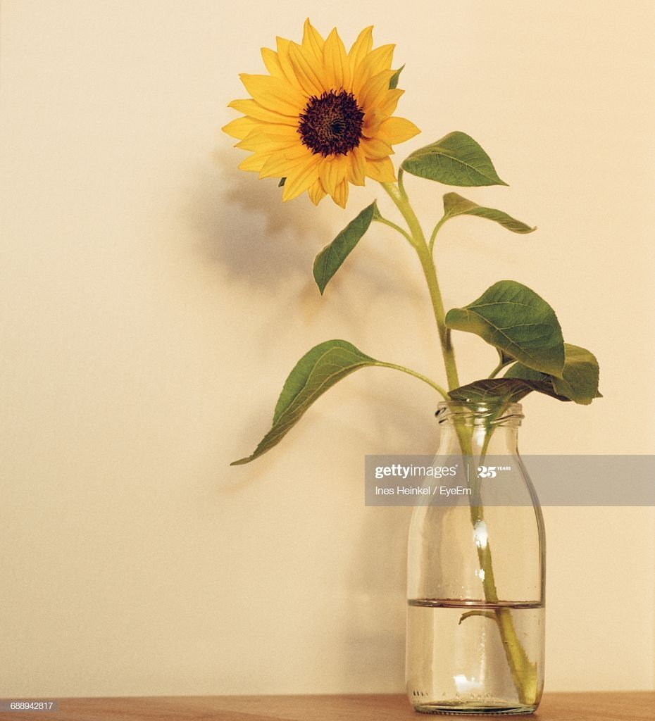 Stock Photo Sunflower In Vase On Table Against Wall In 2020 Sunflower Vase Vase Sunflower Drawing