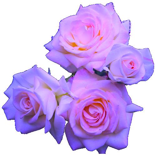 transparent flowers | Transparent flowers, Tumblr flower ...