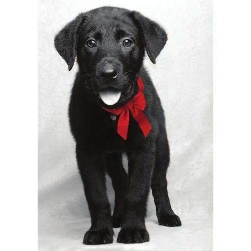 American Humane Association Black Lab Puppy Christmas Card