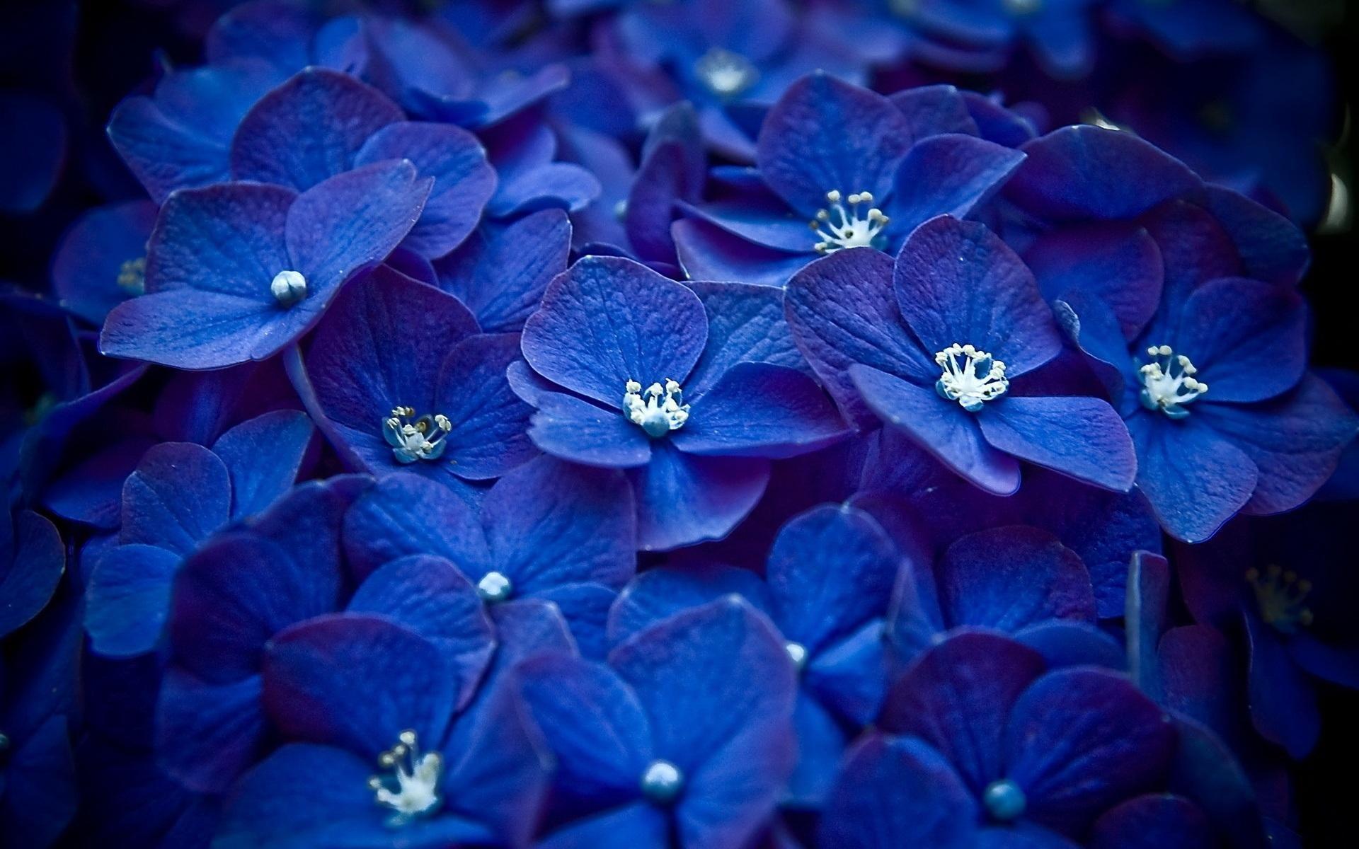 Обои синие, цветы. Цветы foto 7