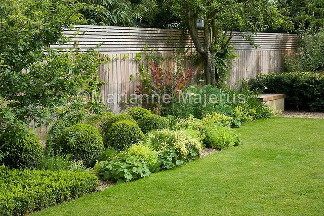 Large Family Garden   Border with clipped Buxus, Santolina, Rosmarinfolia, Cotinus and bench   Charlotte Rowe Garden Design