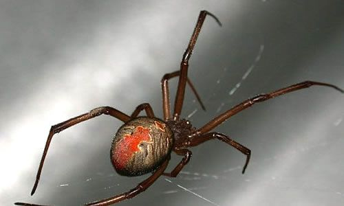 Front Yard Spider Pest Control Pests Mosquito