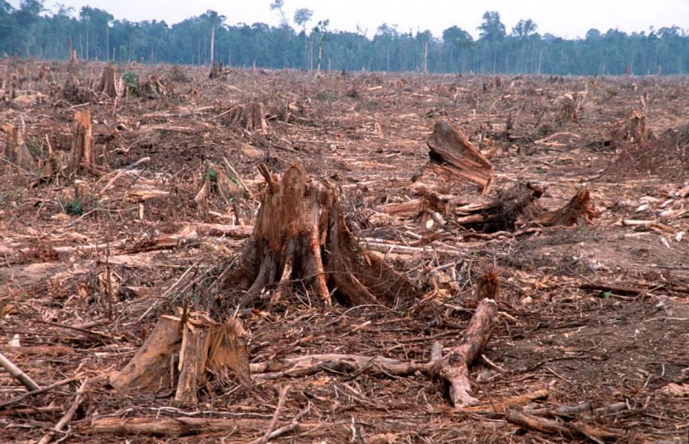 deforestation Google Search Deforestation, Habitats