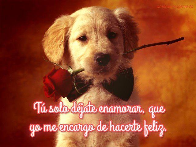 Imagenes De Perros Con Mensajes De Amor Frases Pinterest