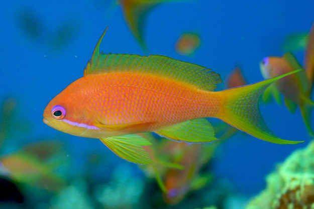 The Most Beautiful Fish In The World Beautiful Fish Fish Marine Aquarium Fish