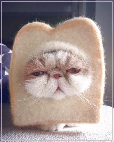 Kucing Lucu Dan Imut Banget