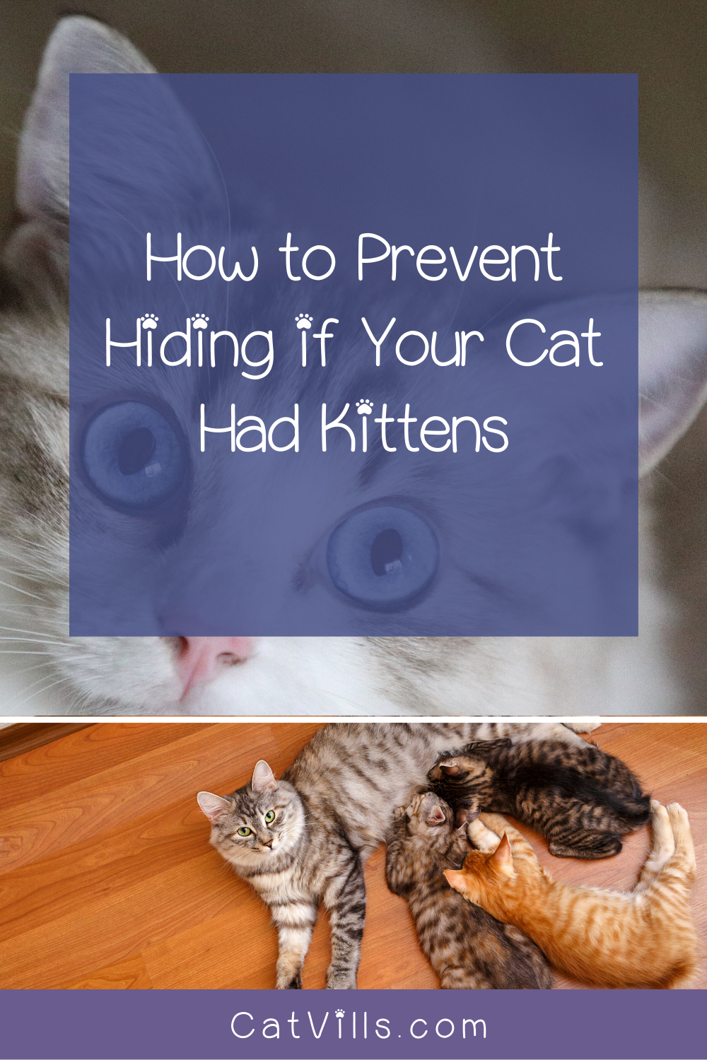 Cat Had Kittens Outside Where They Hide Them And Why Catvills In 2020 Kittens Kitten Care Cat Care