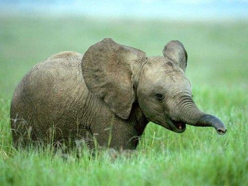 <3 elephants