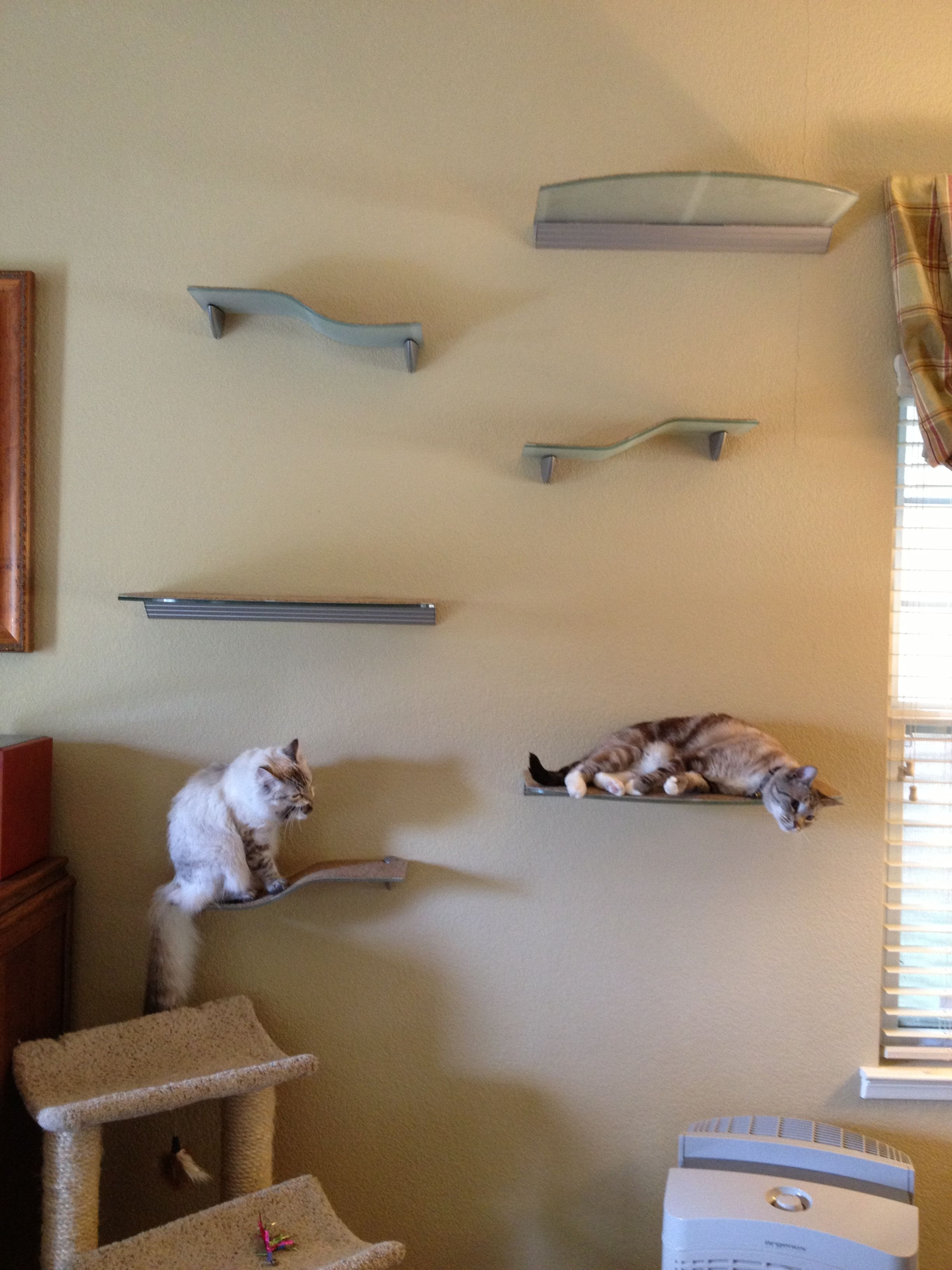 My cool cat climbing wall made with glass shelves from Home Depot