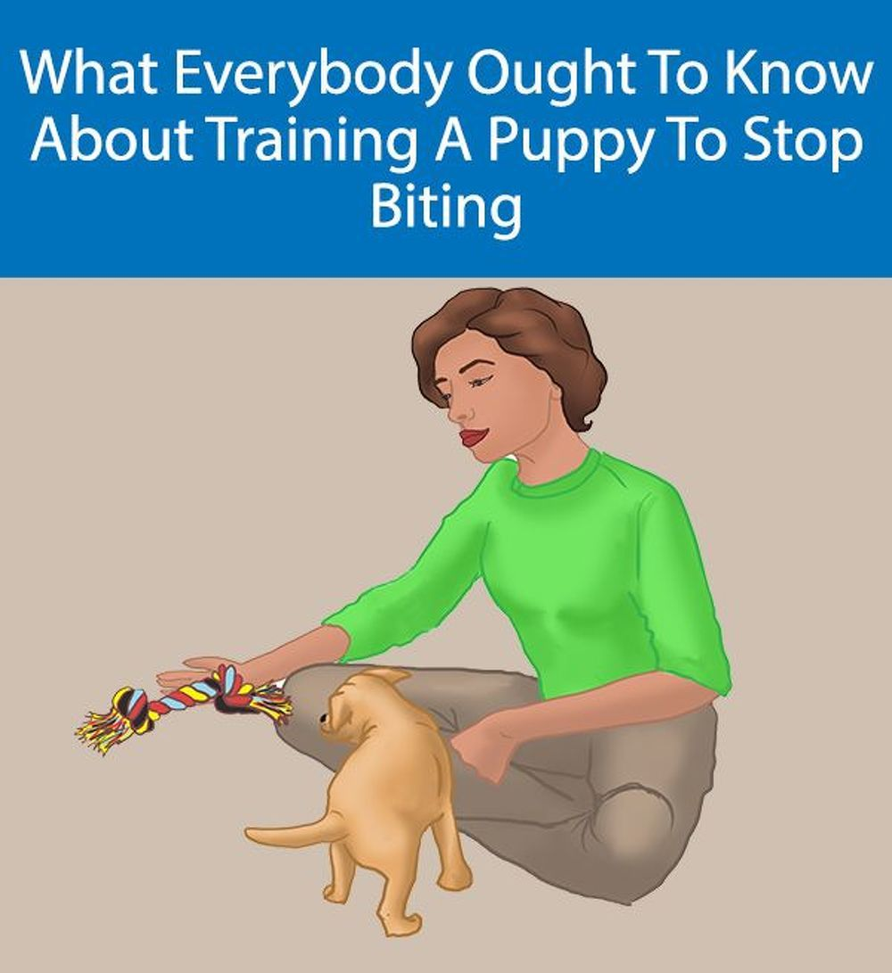 Secrets To Stop Puppy Biting How To Get Puppy To Stop Biting Stop Puppy From Biting How Puppy Training Dog Training Training Your Puppy