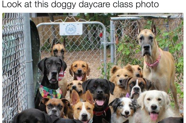 23 Dog Tweets That You Won T Be Able To Stop Smiling At Dogs