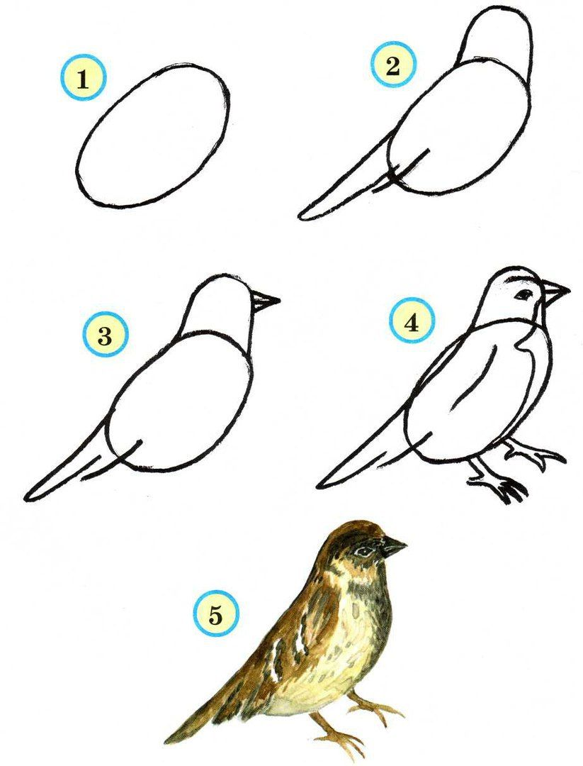 Drawing ideas easy Step by Step Drawing Birds