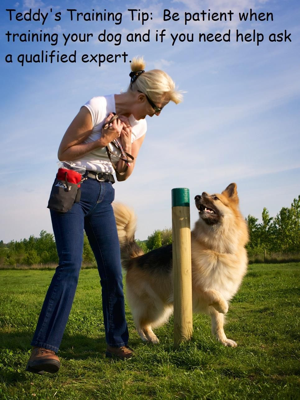 Pin On Teddy S Dog Training Tips