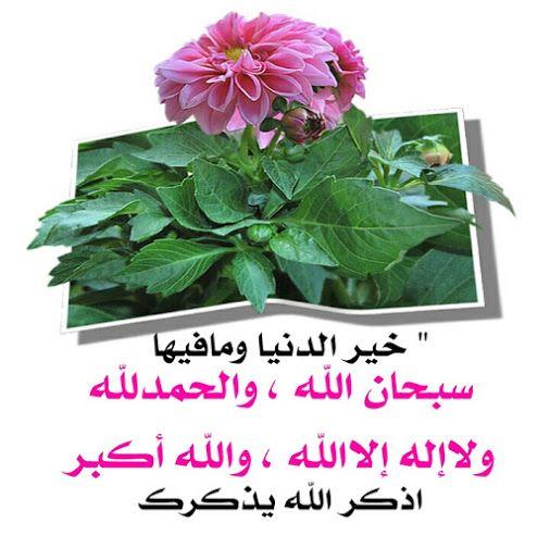 أهل القرآن هم أهل الله وخاصته Community Google Plants Community Signs