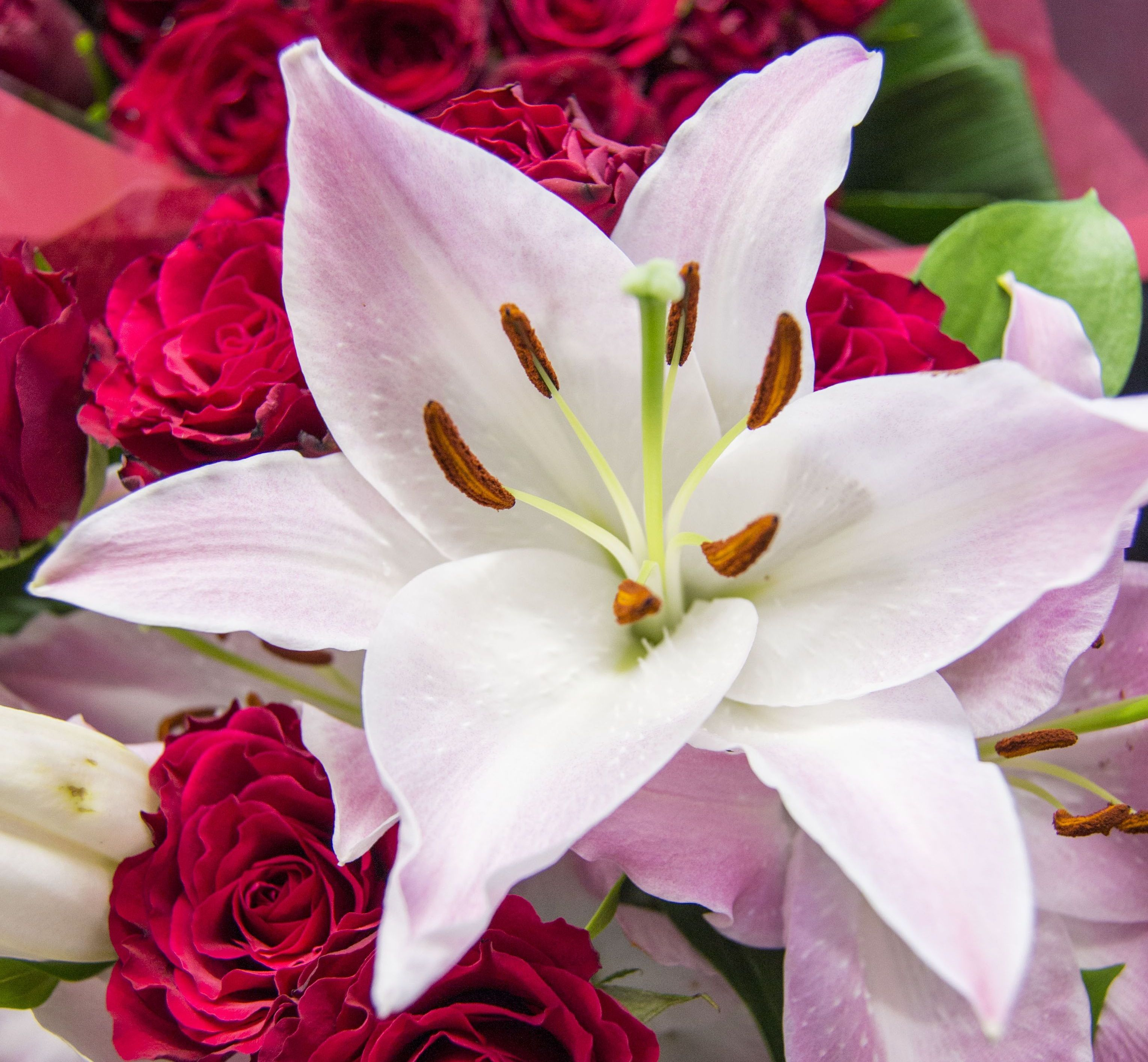 Lily Type Plants: The Different Types Of Lilies. Lilies Are An Incredibly