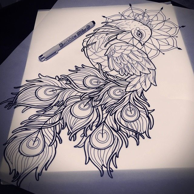 Peacock feather drawing tattoo - photo#49