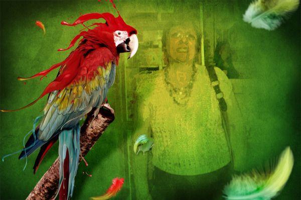 Photofunia Free Photo Effects Online Picjoke Imikimi Imagechef Befunky Funny Photos Photo Fun Parrot Wallpaper Abstract Digital Art Nature Birds
