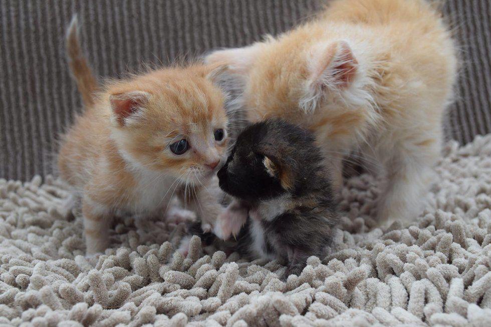 Pin by NuNui SunShine on Kitty Kittens, Kitten rescue